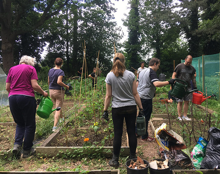 get involved volunteers allotment